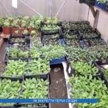 Як вберегти молоді рослини від заморозків