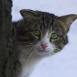 «Мартовские коты»