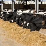 Кормление и содержание коров