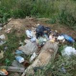 Шостка в мусоре