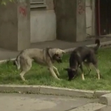 Як убезпечити себе від нападу бродячих собак?
